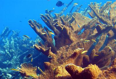 St. Croix U.S.V.I.
