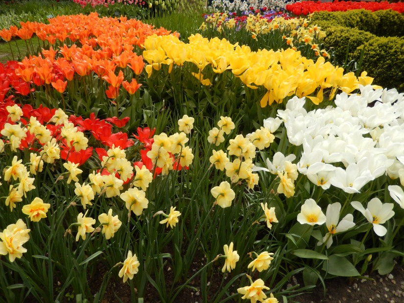 Photo Essay – The Keukenhof