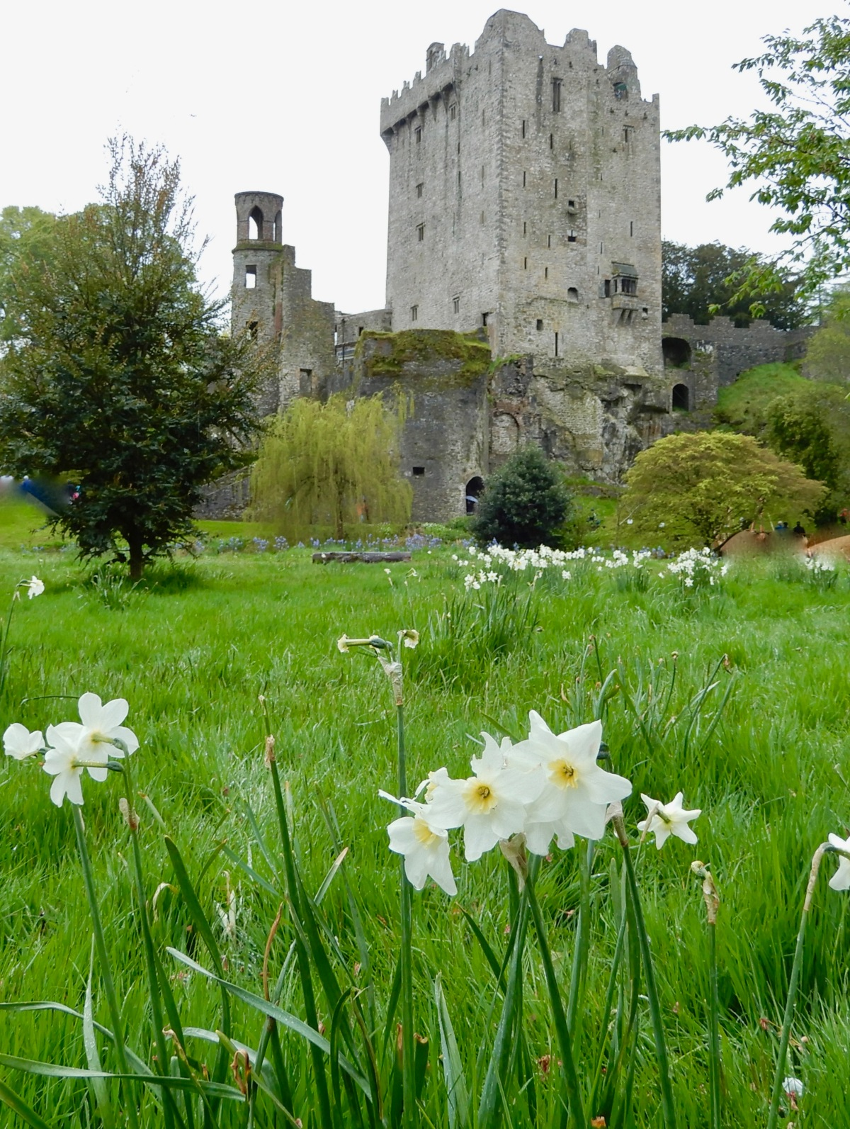 A Wet Day In Blarney