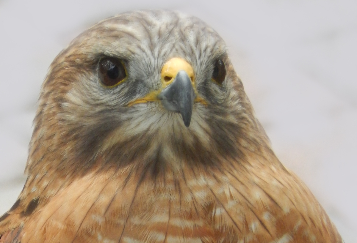 Meet Some Birds of Prey at the Audubon Birds of PreyCenter