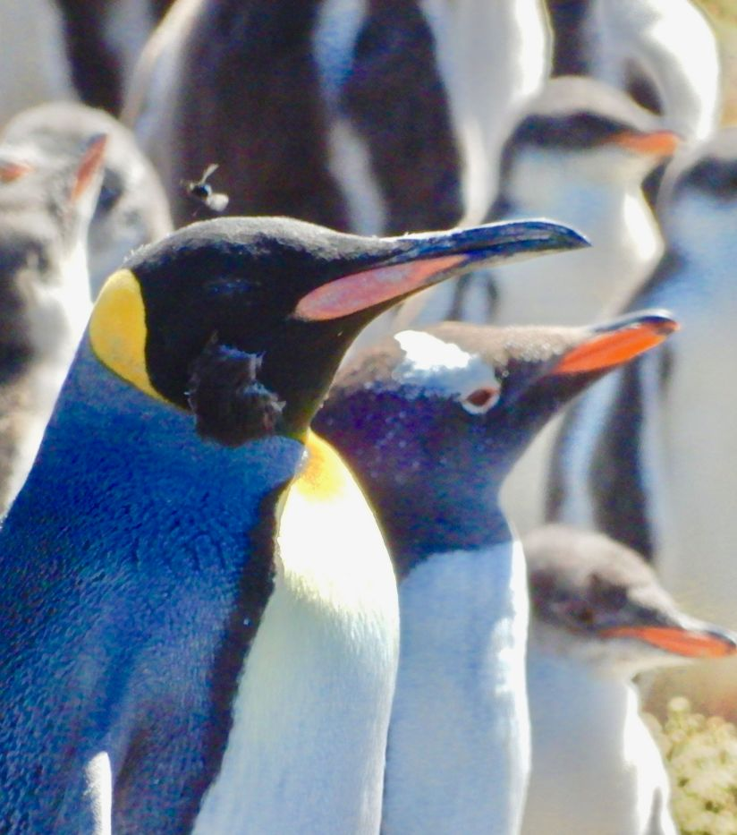 The Falklands, Home to Penguins and Seals