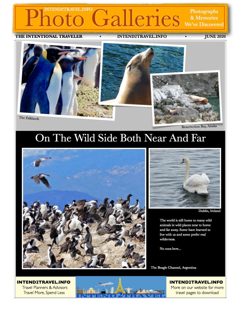 Seals, penguins and other fowl
