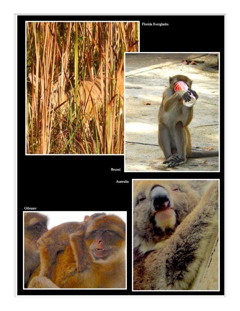 Deer monkeys and a koala